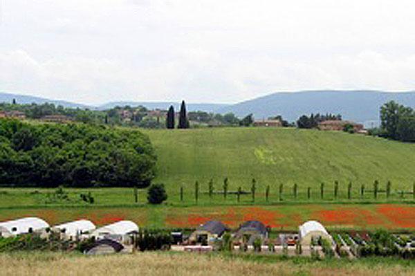 azienda vivaistica Siena