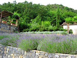 Vendita di piante Siena