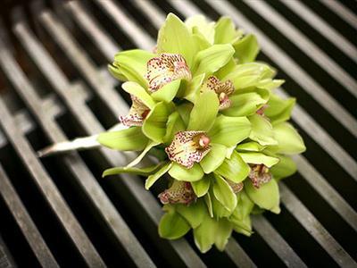 bouquet orchiedee
