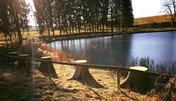 Abbattimento abeti lago