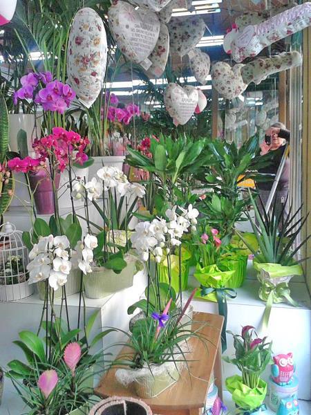 Il negozio Marcella fiori