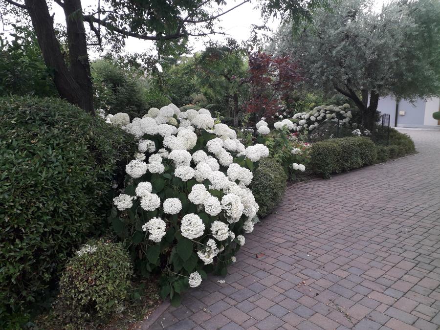 giardiniere professionale
