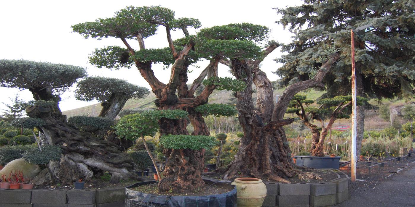 vendita piante e alberi catania