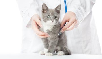 Visite veterinarie a domicilio