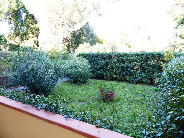 Bonaccetta giardino