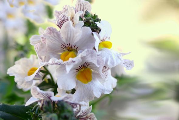 addobbi floreali onoranze funebri vignoli Roma