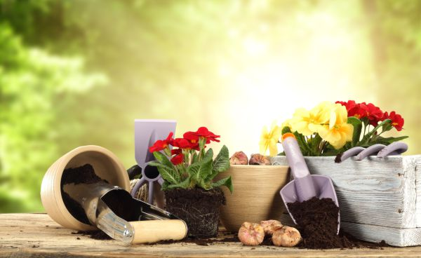 giardinaggio marsala
