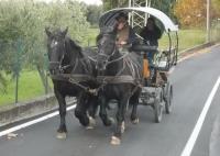 passeggiate in carrozza