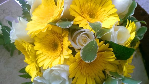 I nostri fiori Jack di fiori