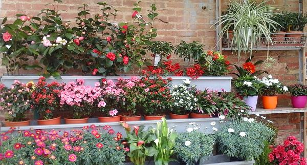 fiori di stagione ed esotici