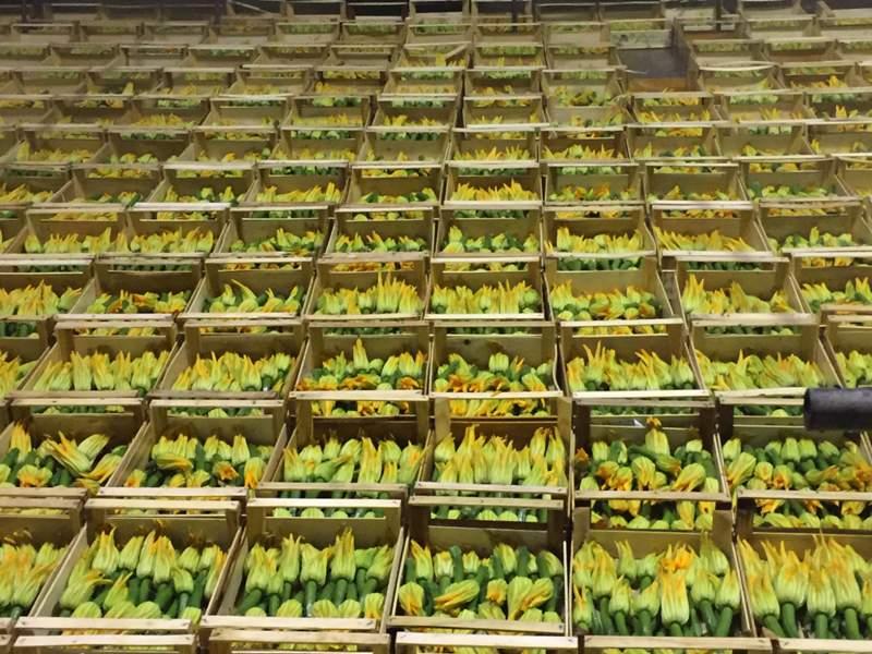 coltivazione ortaggi Bergamo
