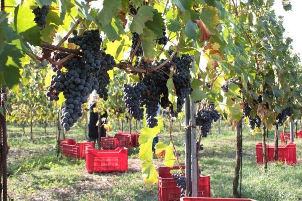 azienda vitivinicola Montefalco Perugia