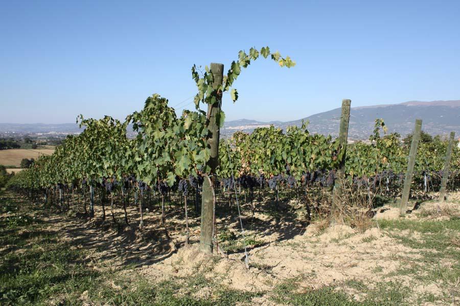 Die Anbauflächen Montefalco Perugia