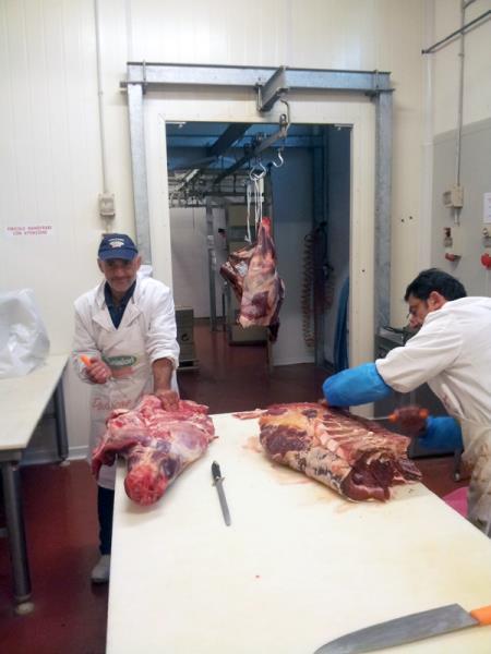 Fornitura carne Viterbo