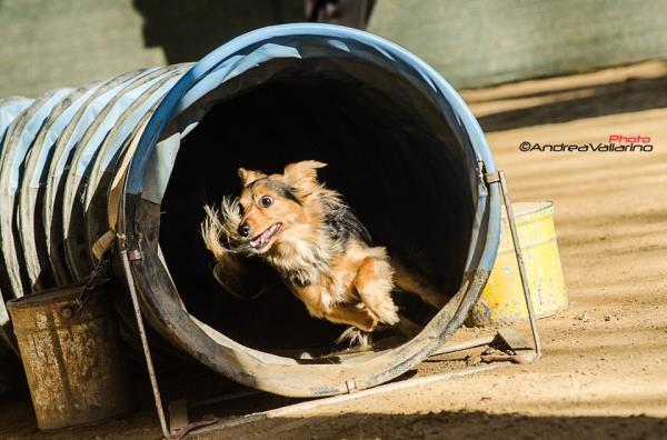 rieducazione cani Torino