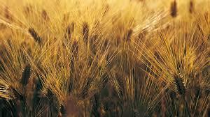 Ricambi agricoli Samugheo