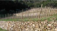 Costruzione Muretti a secco Imperia Savona Costa Azzurra Liguria | Impresa di costruzioni EDIL FE.MO