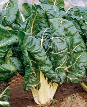 insalata a foglie