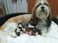 clinica veterinaria Perugia