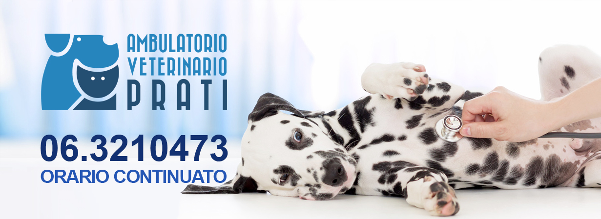 ambulatorio veterinario roma prati