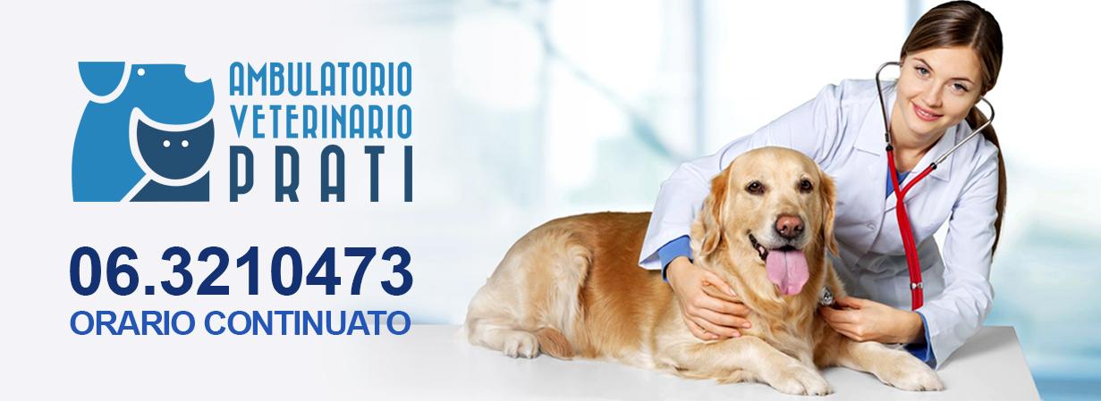 orario continuato ambulatorio veterinario roma prati