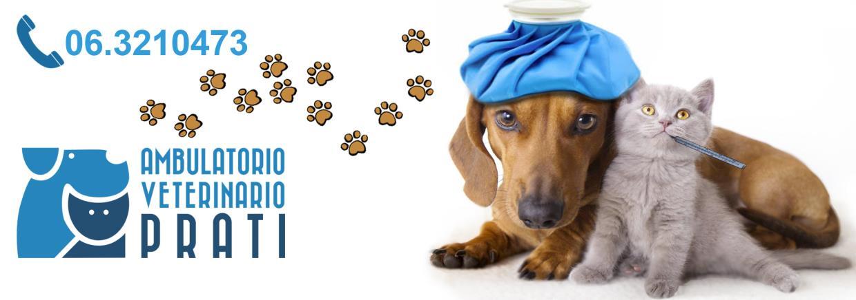 patologie più comuni cani e gatti veterinario roma prati