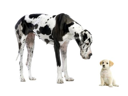 requisiti per cani