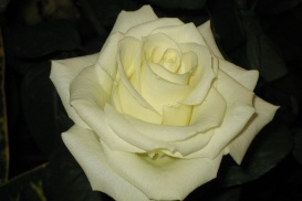 onoranze funebri la spezia f.lli camaiora