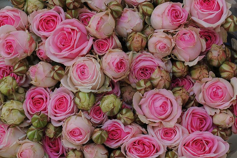 grossista fiori e piante Terni