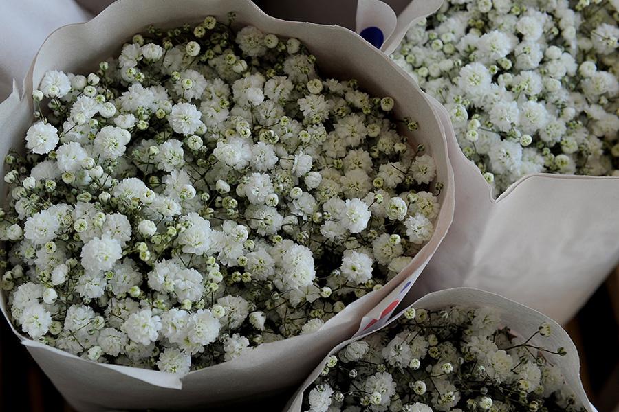 fiori e piante all'ingrosso Terni