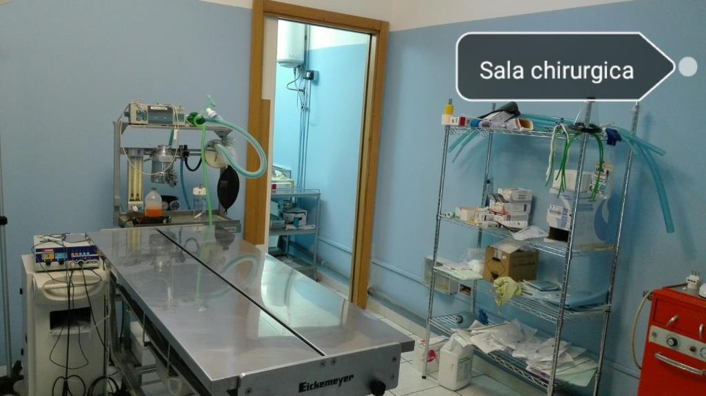 ambulatorio veterinario Matera