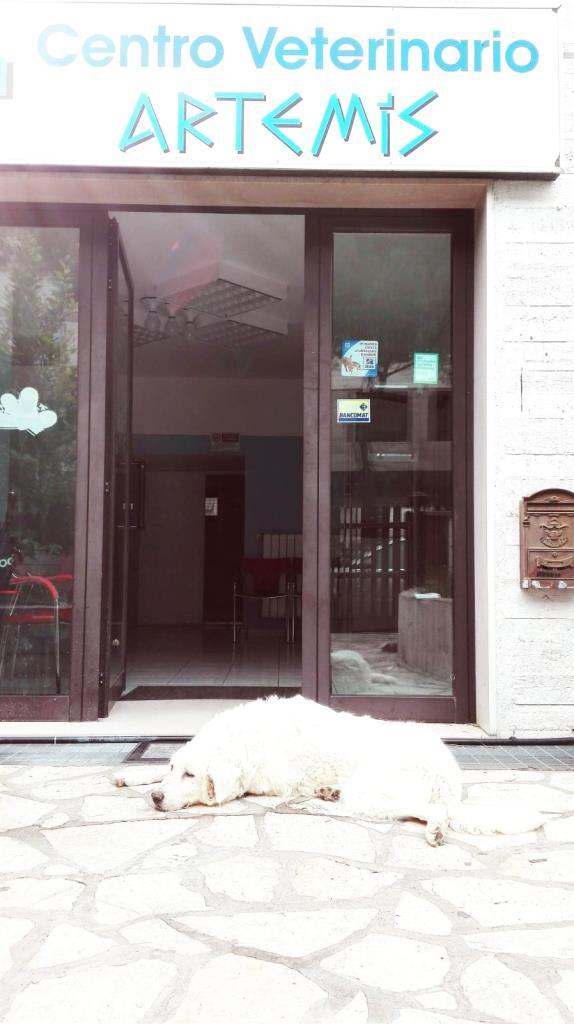 centro veterinario Matera