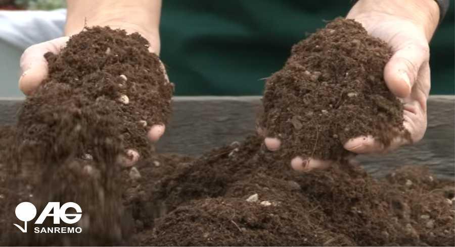 Coltivazione Annaffiamento Rinvaso Piante Grasse Cactacee Cactus Sanremo Imperia Liguria | AG SANREMO