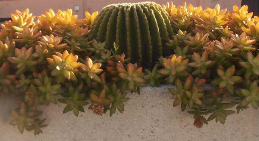 Realizzazione Giardini Terrazzi Balconi fioriti con Cactus e Succulente Sanremo Imperia Liguria Italia | AG SANREMO