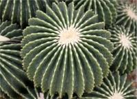 Vendita Cactus Piante Grasse Particolari Euphorbia Agave Crassula | AG SANREMO