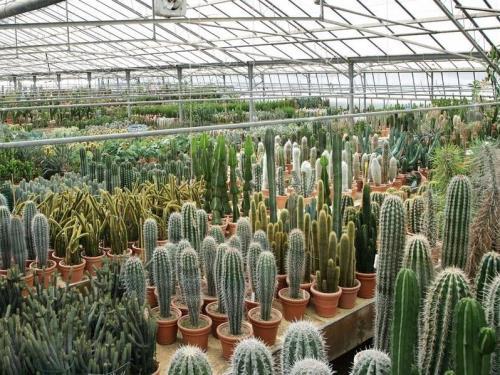 Le Nostre Serre di Cactus e Succulente | AG SANREMO