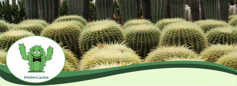 Produzione, Coltivazione e Vendita Piante Grasse Cactacee Cactus Mister Cactus Sanremo Imperia Liguria | AG SANREMO