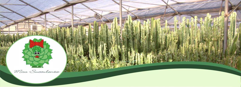Produzione, Coltivazione e Vendita Piante Grasse Cactacee Succulente Miss Succulenta Sanremo Imperia Liguria   AG SANREMO