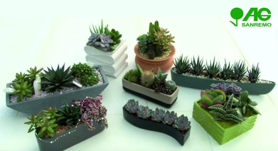 Succulent Plant Cactus Combinations Potted Succulents Sanremo Imperia Liguria | AG SANREMO