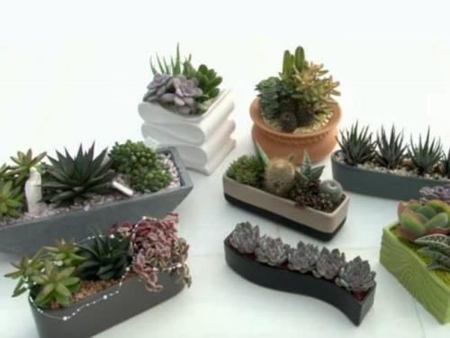 Pot Combinations with Cactus and Succulents Imperia Liguria Italy | AG SANREMO