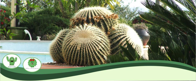 Production, Cultivation and Sale of Cactus-family Succulent Plants Sanremo Imperia Liguria | AG SANREMO