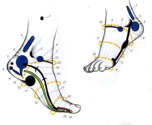piedi riflessologia